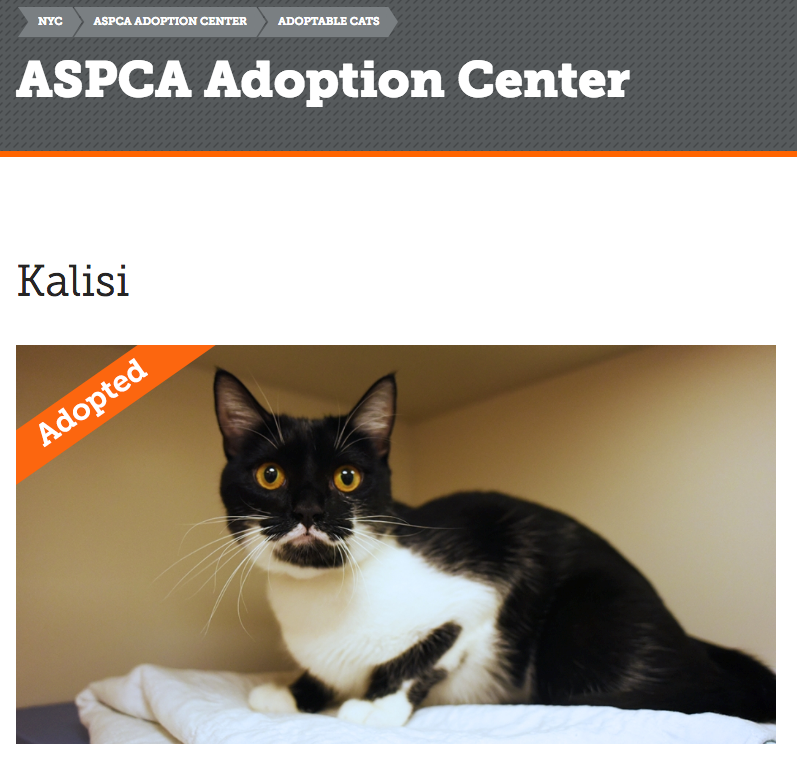 Screenshot from the ASPCA adoption page. Adopted by me!