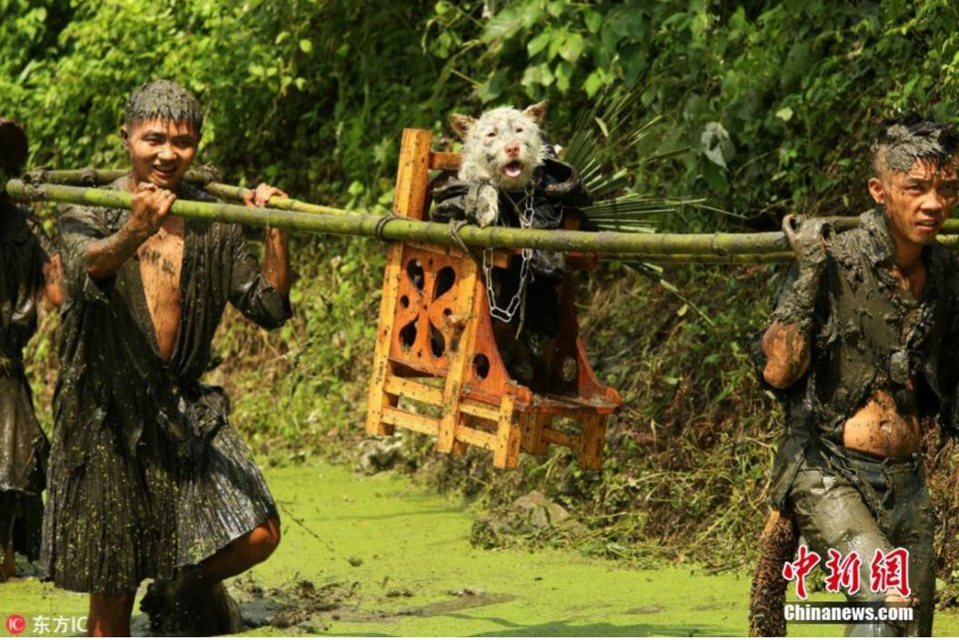 "Guizhou Residents Carrying a Dog on A Throne for ""Dog Carrying Day"""
