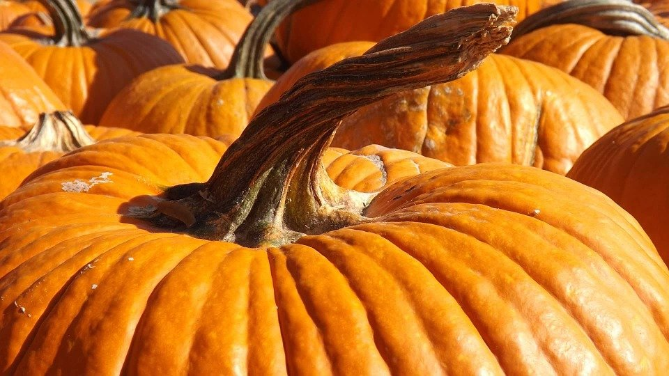 Picture of pumpkins
