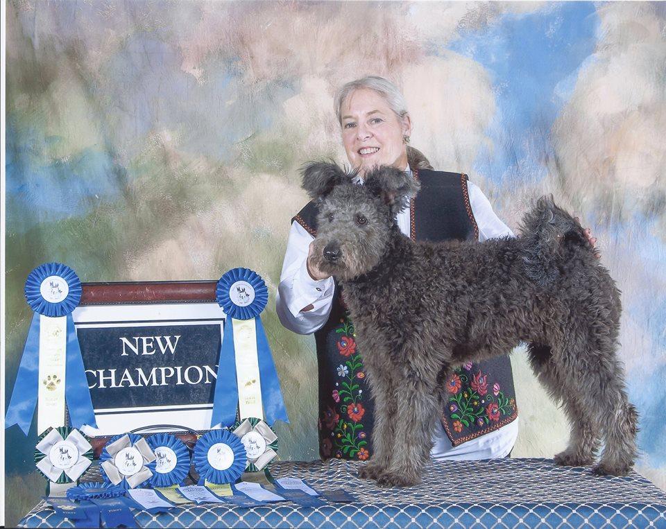 Pumi show dog winner