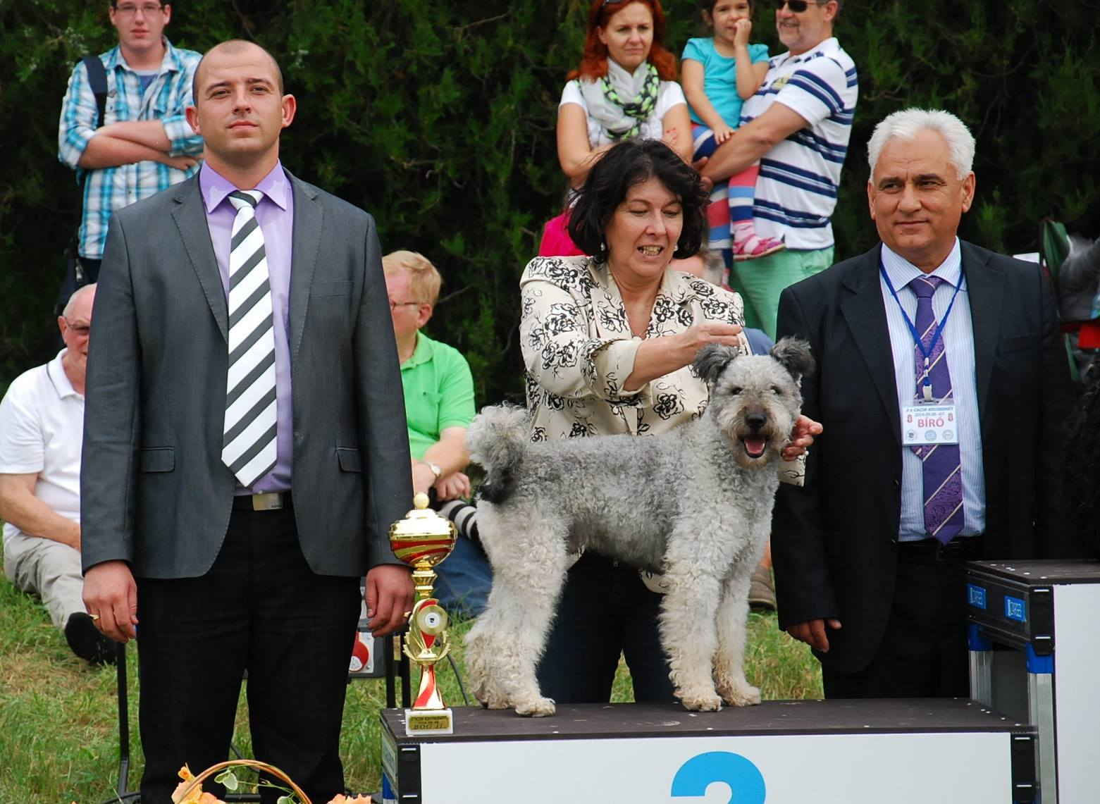 Pumi Show Dog