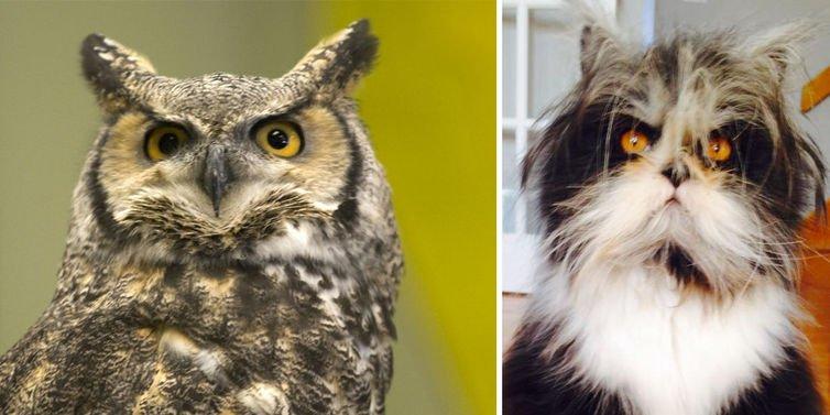 Atchoum and Owl