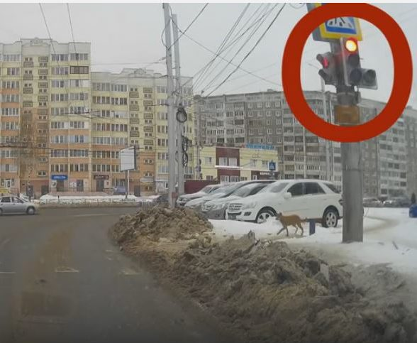 Dog Waiting for Traffic Light