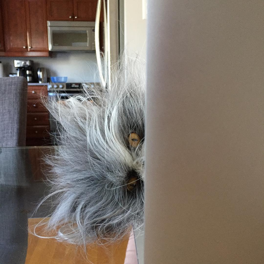 Atchoum sticking his head around the wall