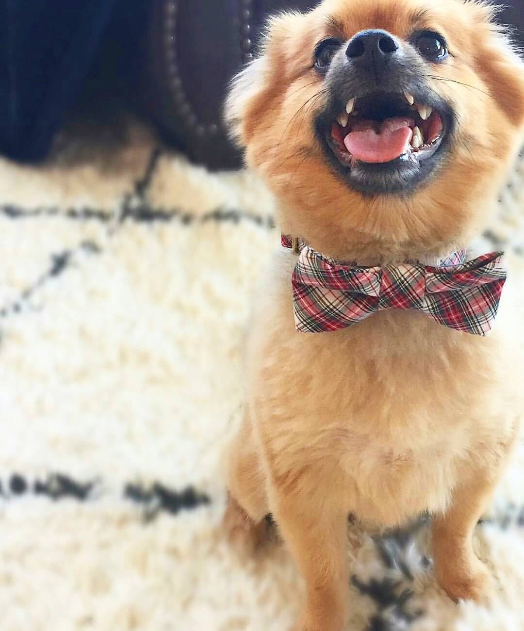 Dog Bow Tie from Crew LaLa From Unique Dog Gifts Post