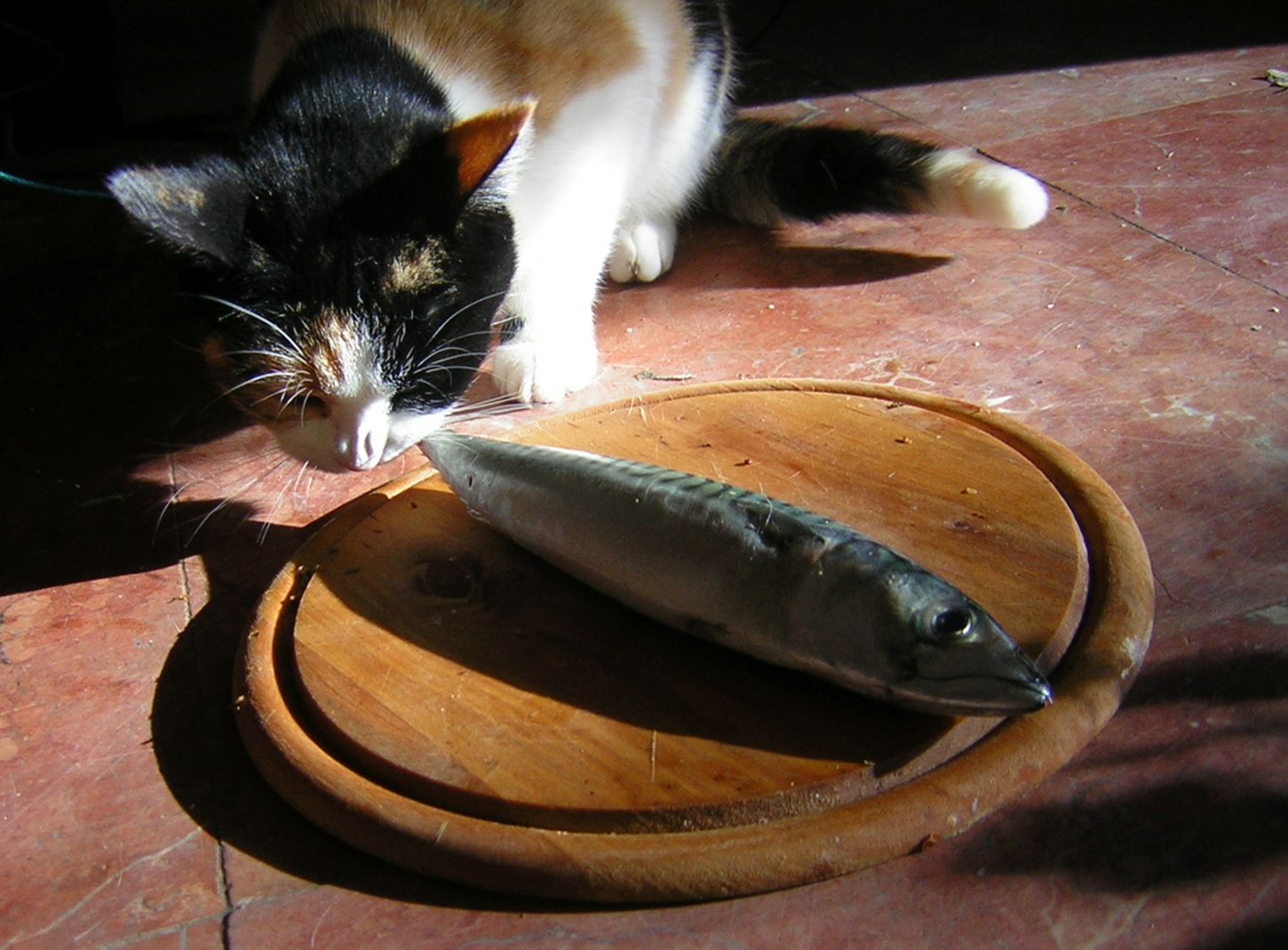 Cat eating a whole fish