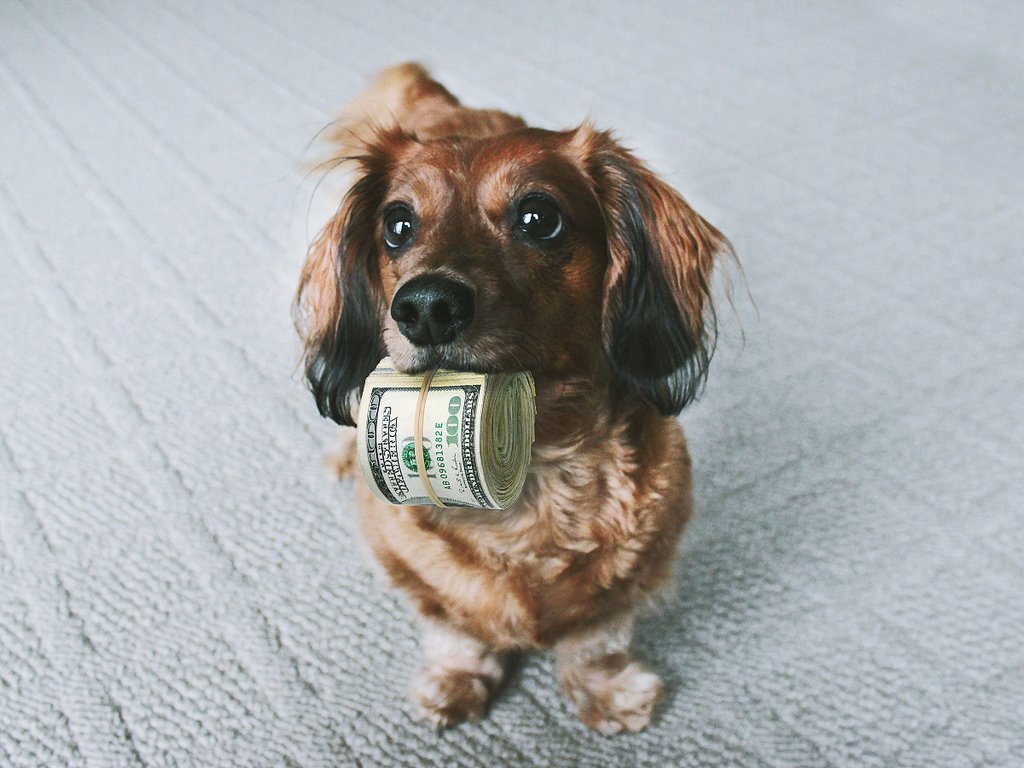 Cute dog holding money for pet insurance