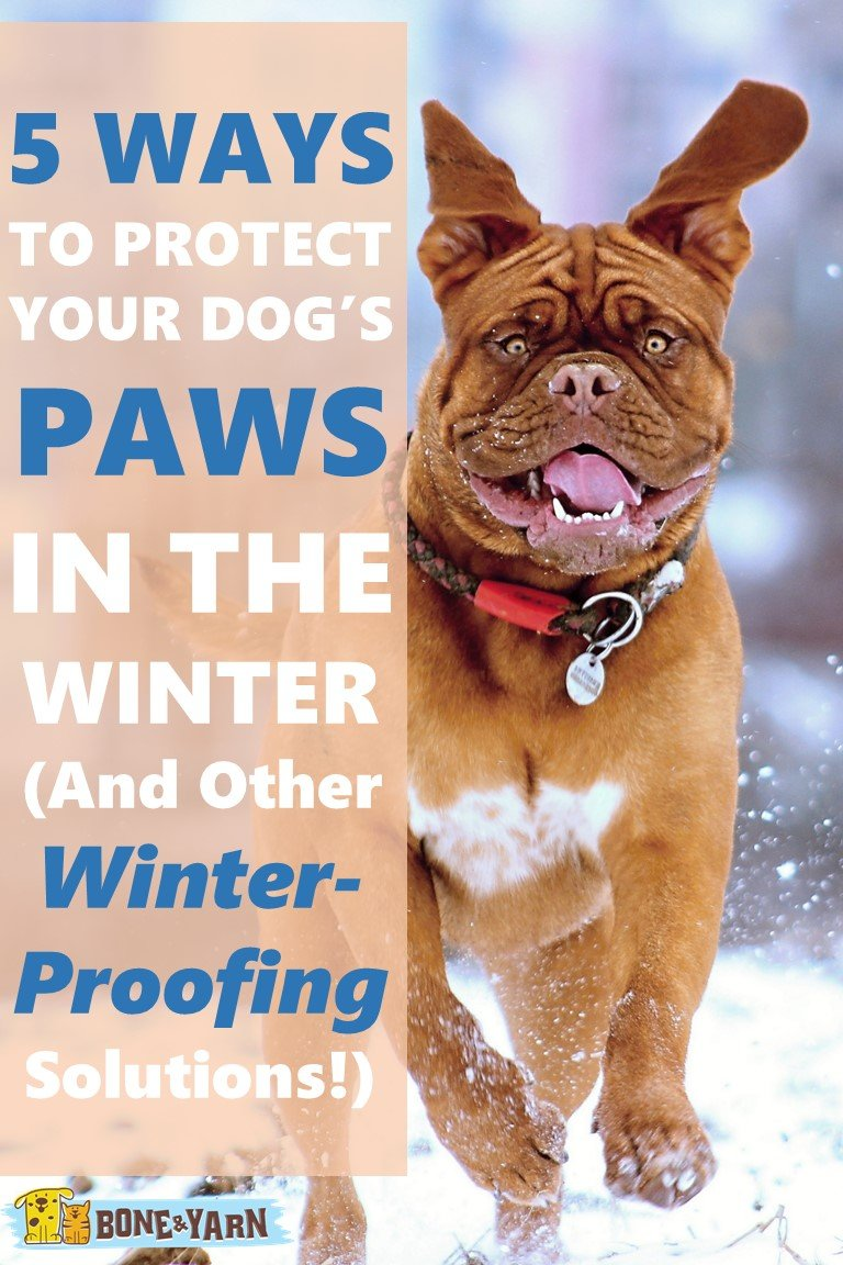 5 WAYS TO PROTECT YOUR DOG'S PAWS IN THE WINTER (And Other Winter-Proofing Solutions!)