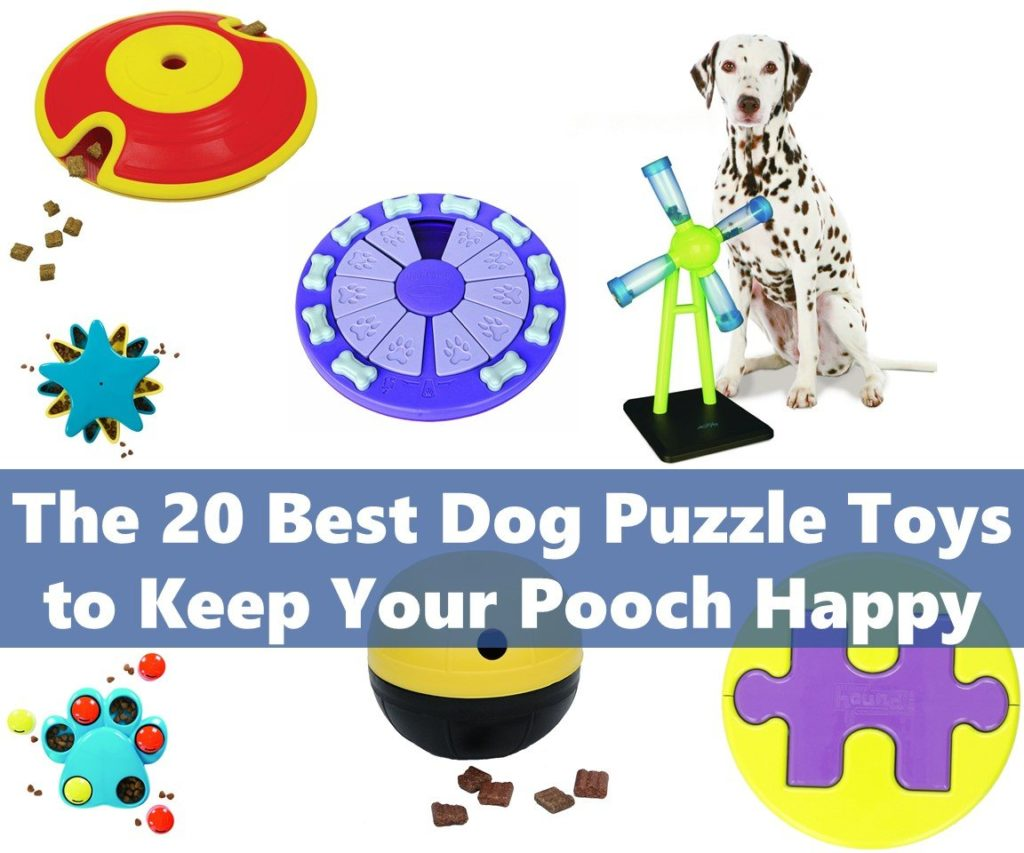 The 20 Best Dog Puzzle Toys