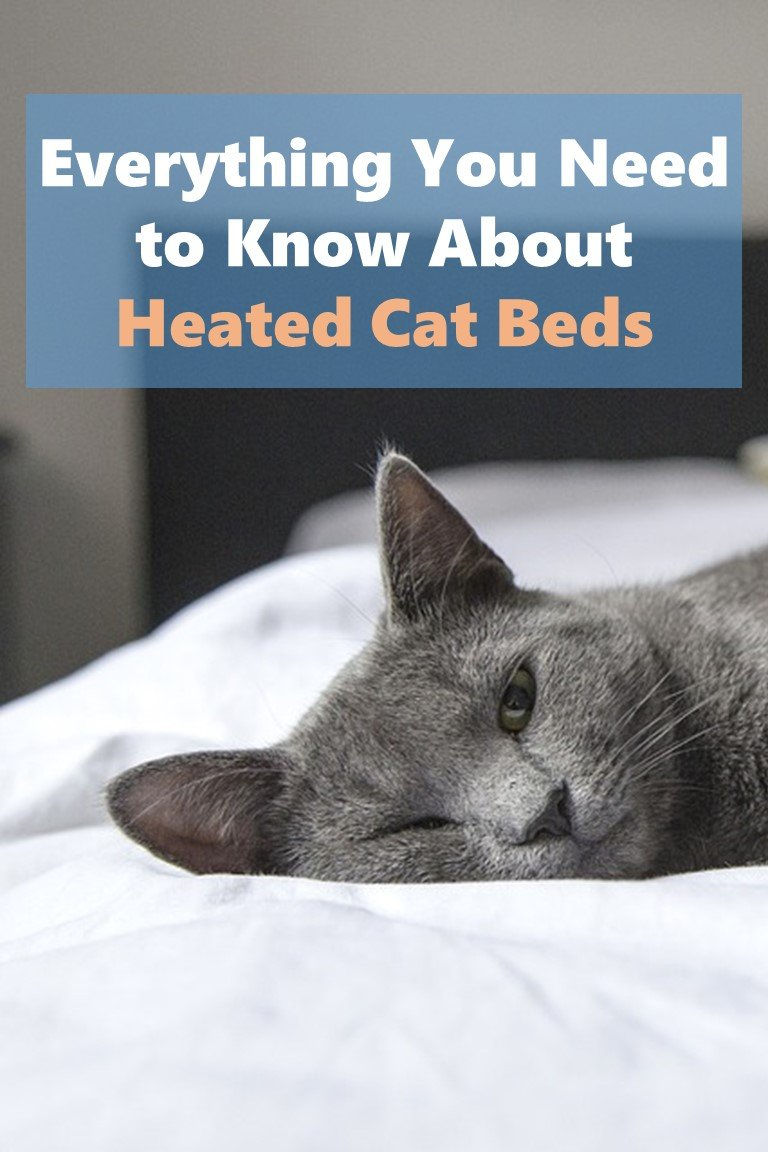 Everything You Need to Know About Heated Cat Beds Cover Picture