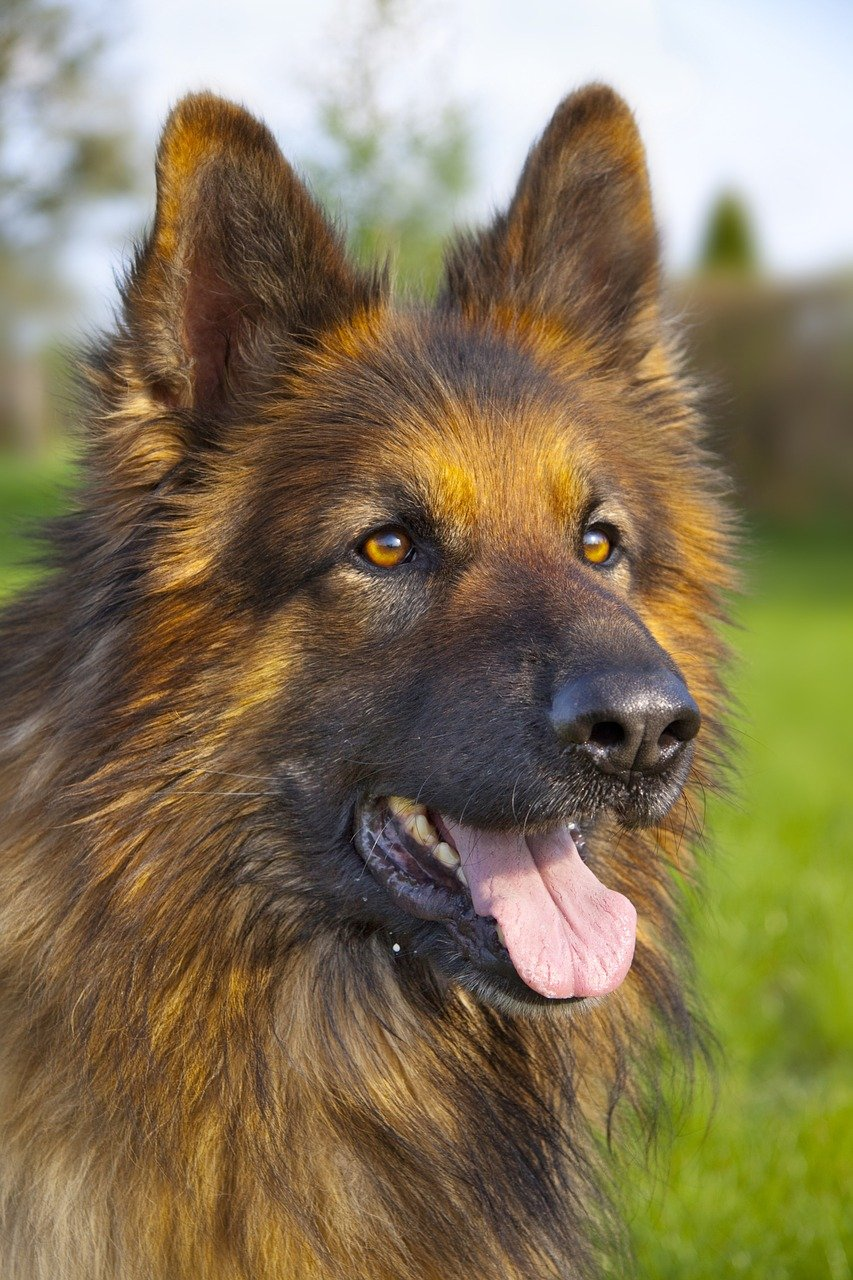 Things You MUST Avoid When Cleaning Your Dog's Ears