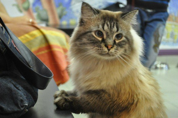Cat Republic Cat Cafe