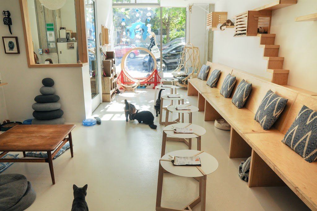 Kit Tea Cat Cafe