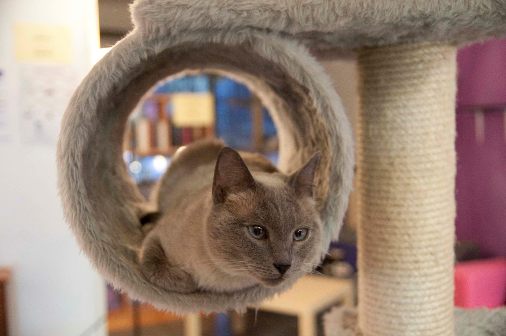 La Gatoteca Cat Cafe