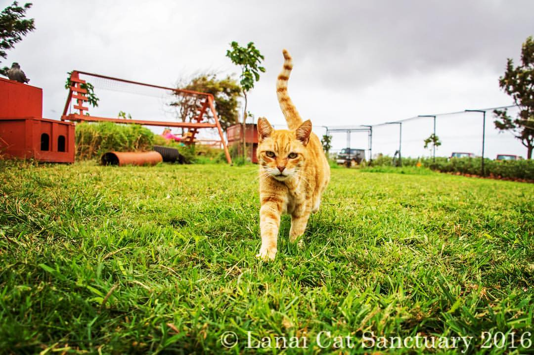 Lanai Cat Cafe