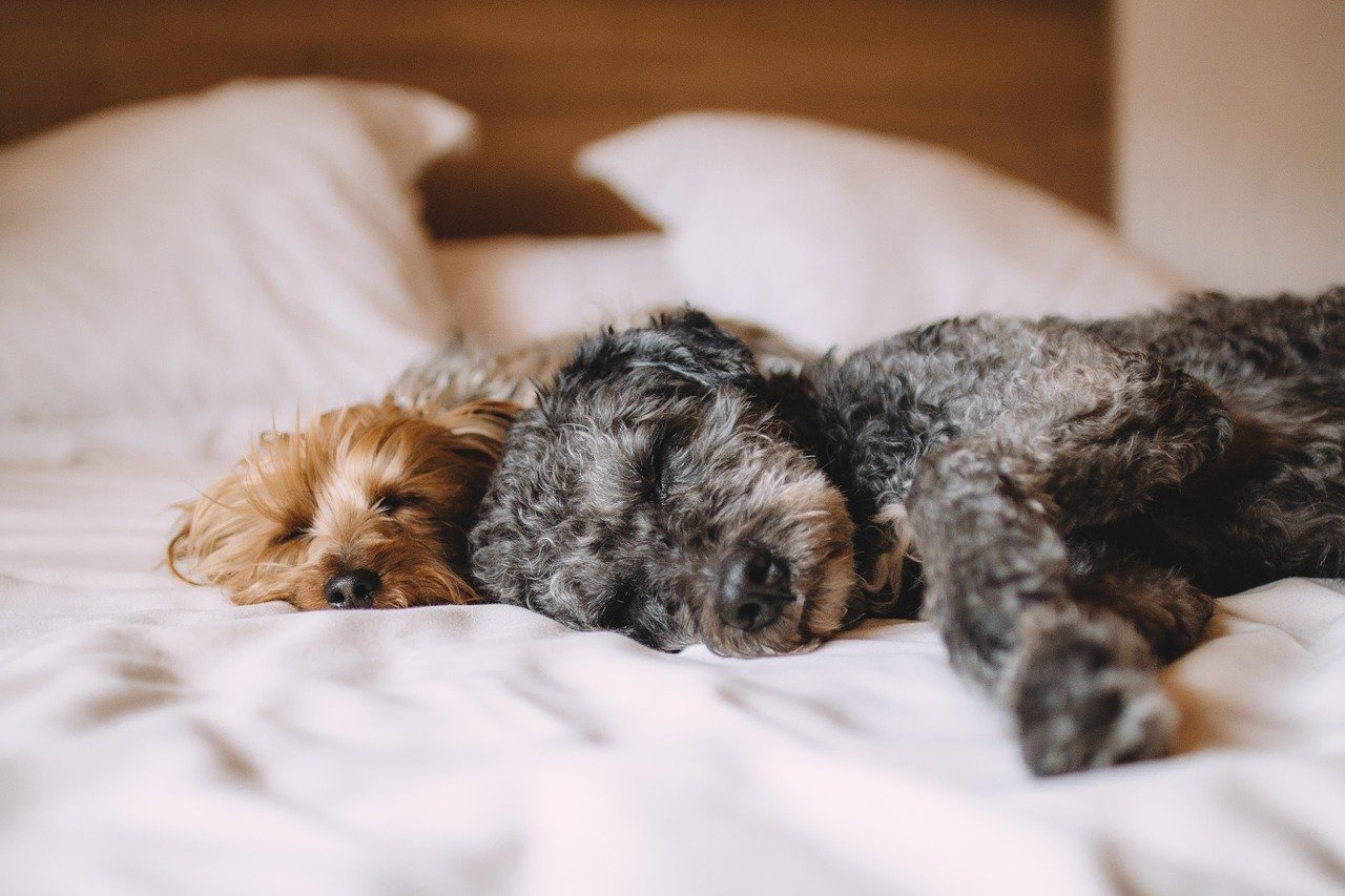 Sleeping dogs get dry noses, but it isn't a need for concern