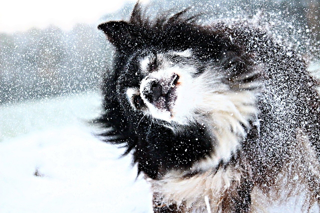 Winter will give your dog a dry nose