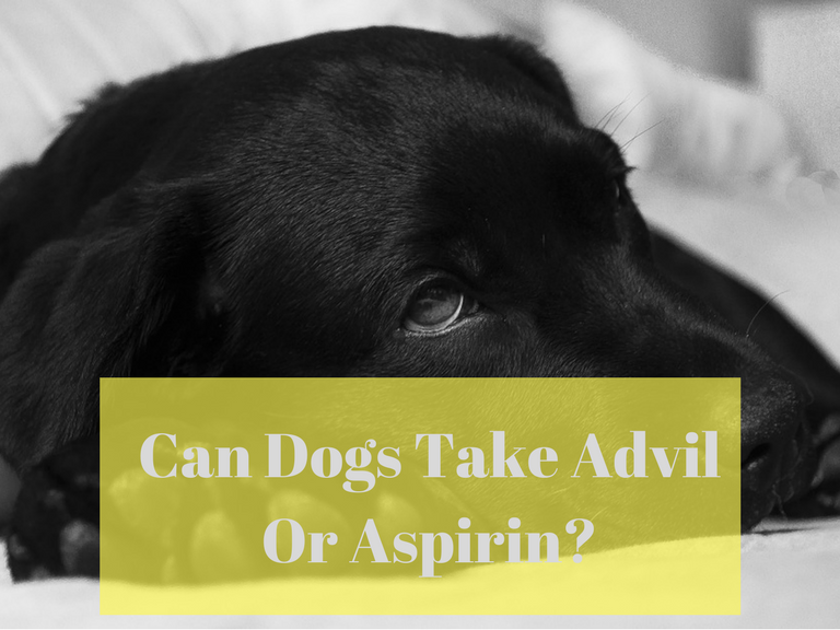 can dogs take advil