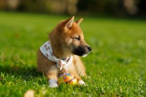 best pet friend weed killers and pesticides