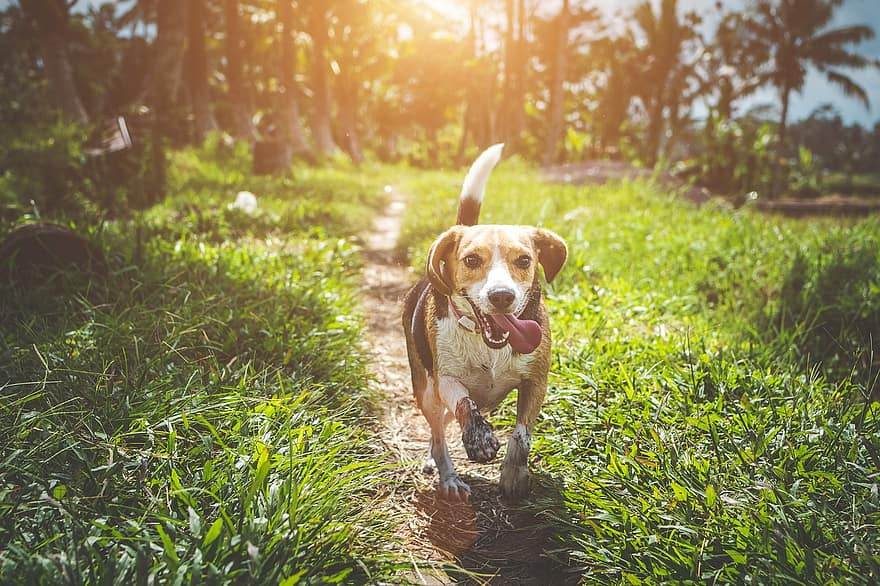 Best Shock Collars for Dogs