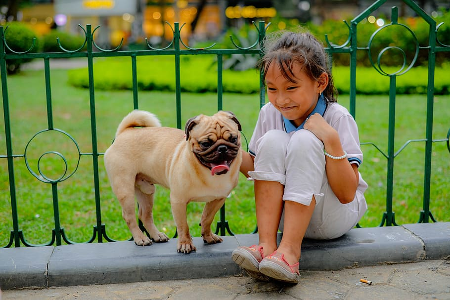 pug breed with children