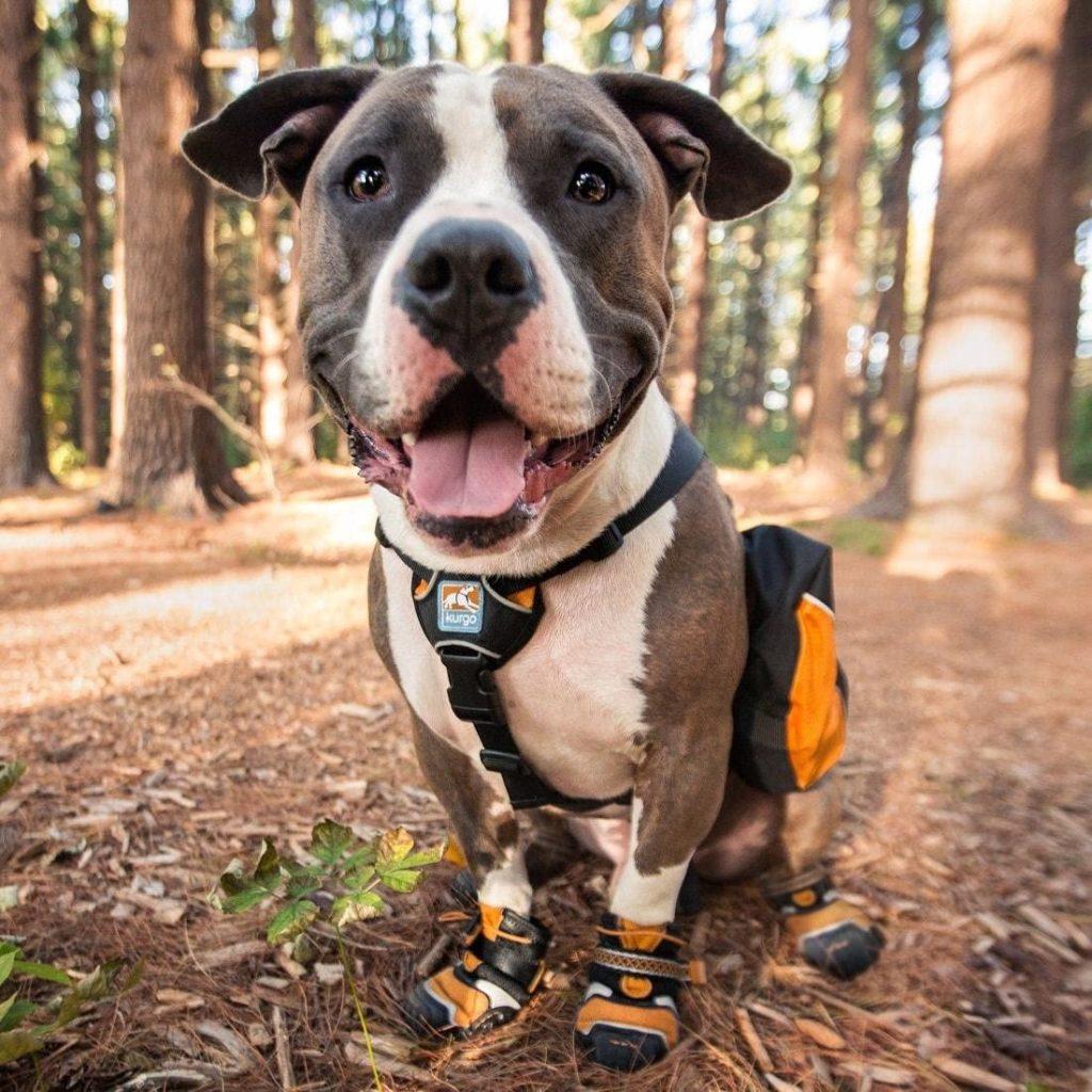 kurgo dog hiking boots