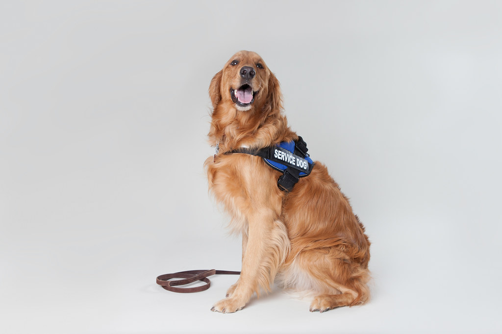 best service dogs