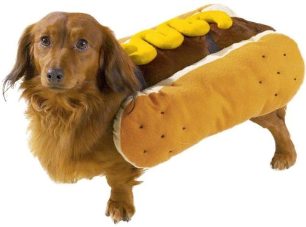 Hot Diggity Dog with Mustard Halloween Costume