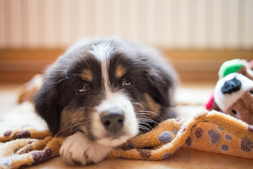 best calming dog treats