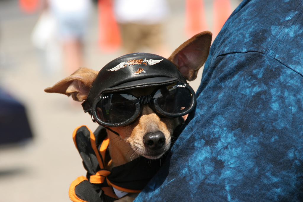 No matter their size, all dogs deserve biking time