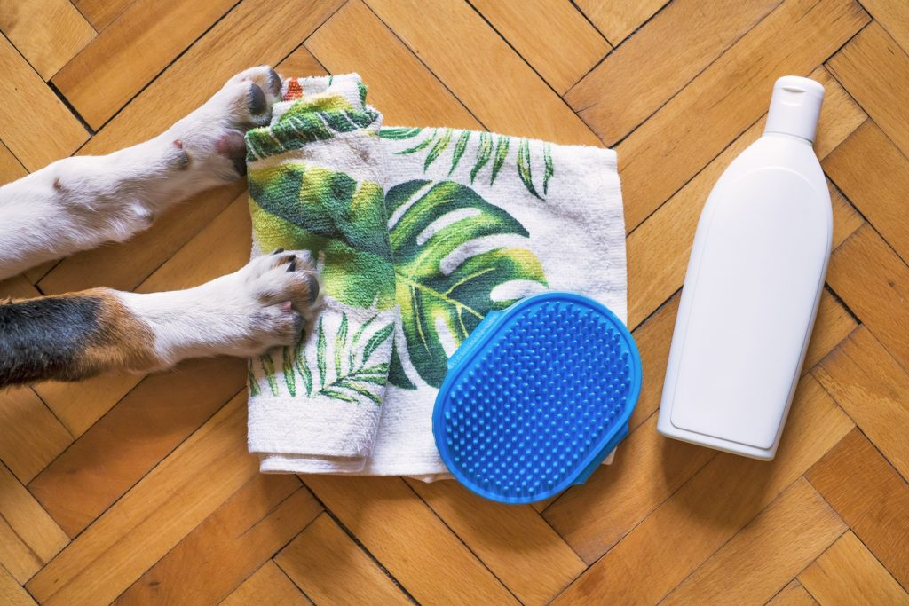Flea shampoos are one option for dealing with an infestation