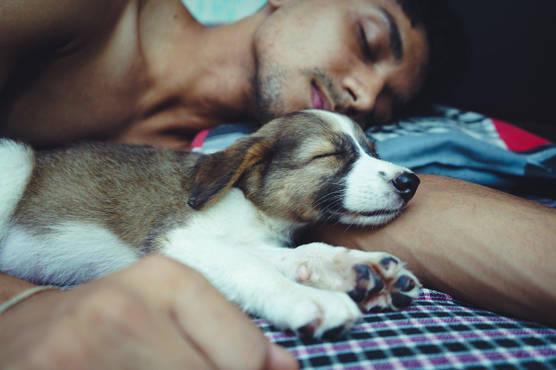 best calming dog beds