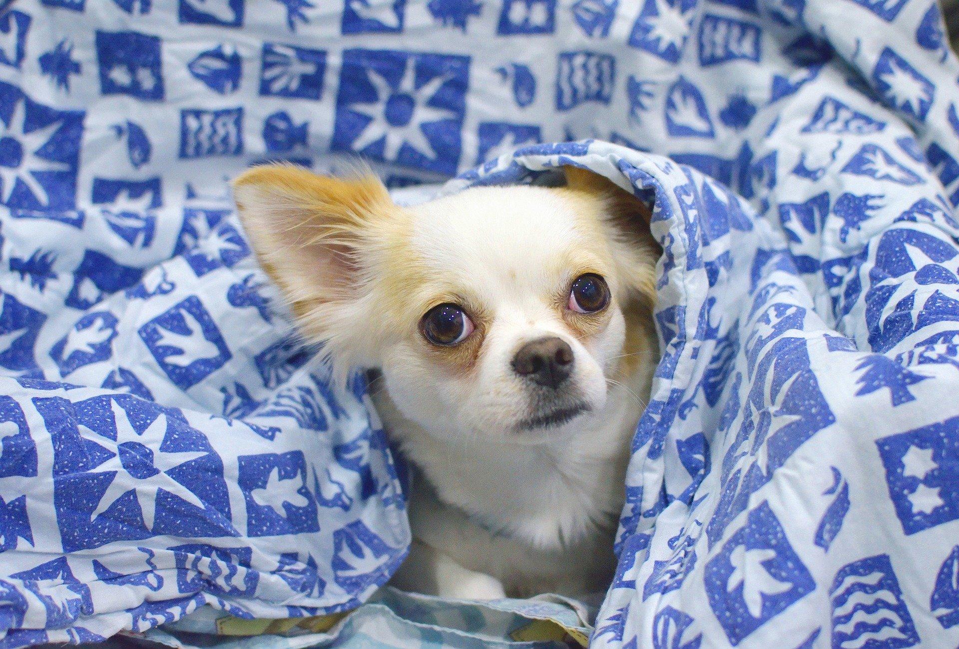 best dog blanket