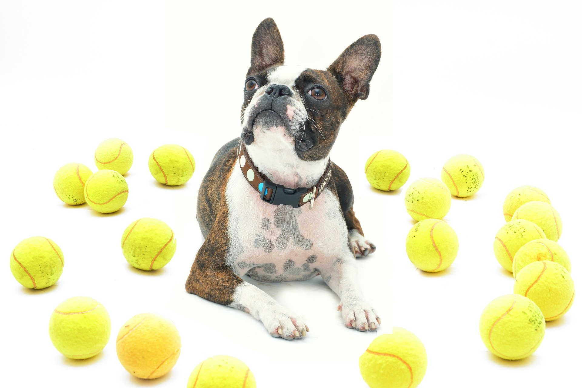 tennis ball launchers for dogs