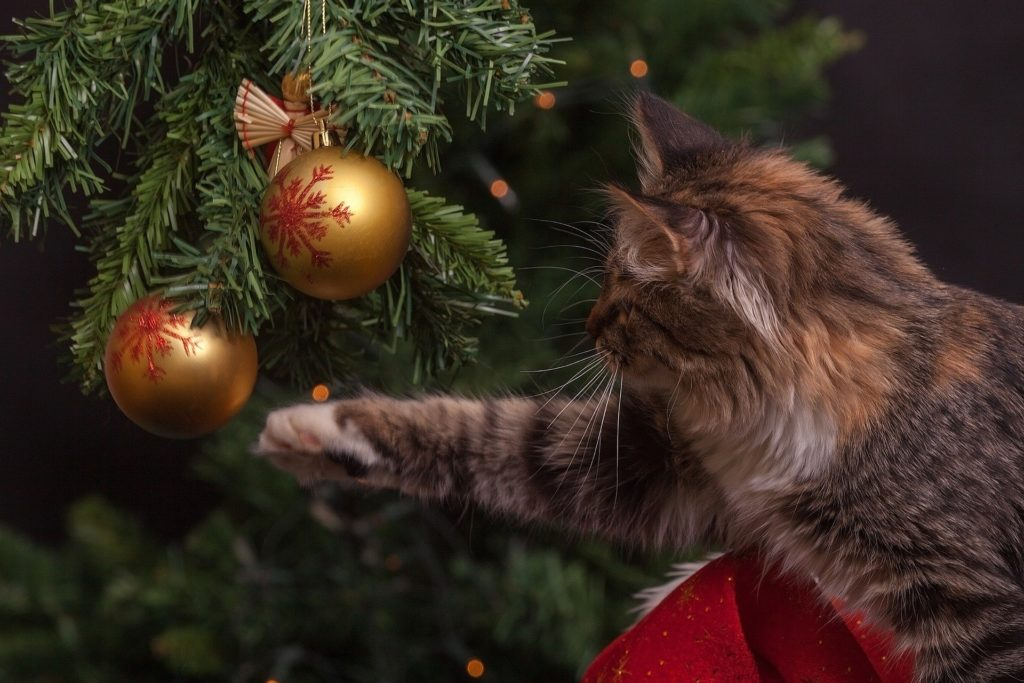 keep cats out of christmas tree