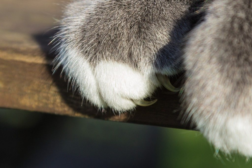 The white part of a cat's nails are what you want to trim