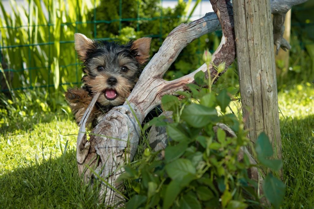 Puppies are cute, but screen your breeders carefully for red flags